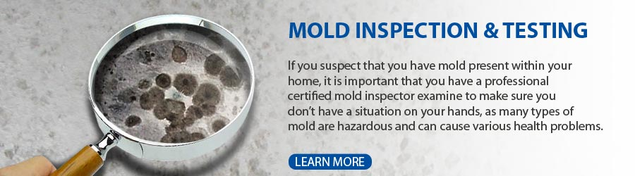 Professional Mold Services Certified Inspection