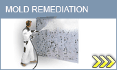 Mold remediation PA banner