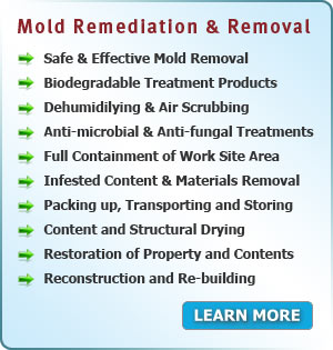 Services Area PA - Mold Remediation and Removal